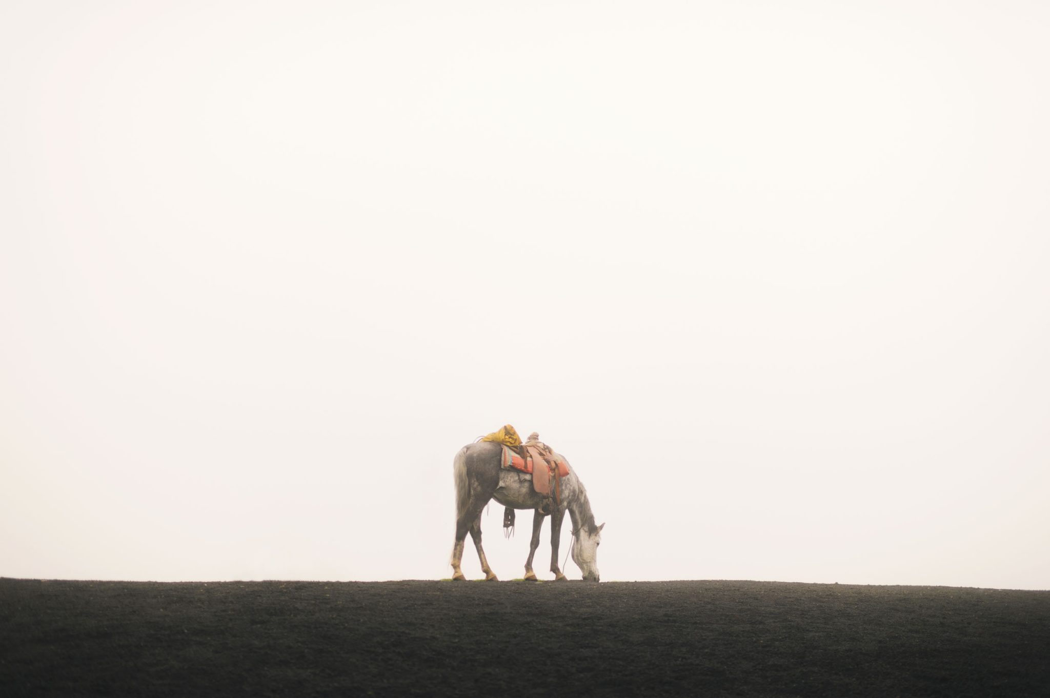 Volcanic Grazing, Guatemala Collection. Fine Art Nature Photography.