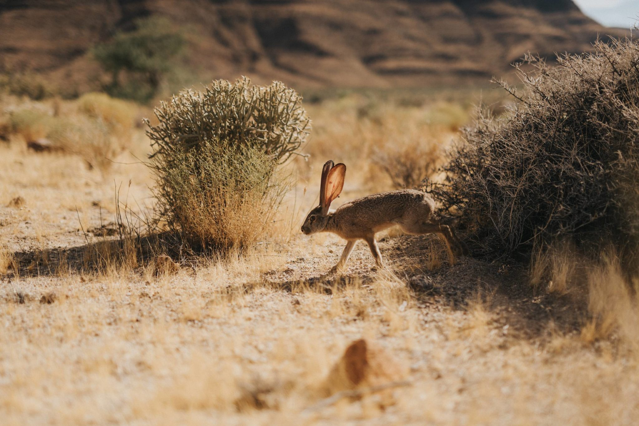 Life, Mojave Desert Collection. Fine Art Nature Photography.